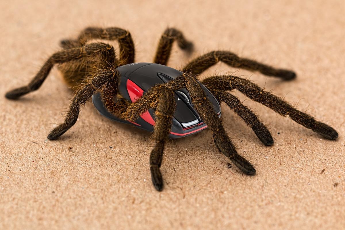spider-2913761_1920